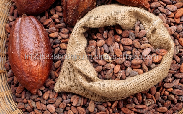 Best quality cocoa Beans