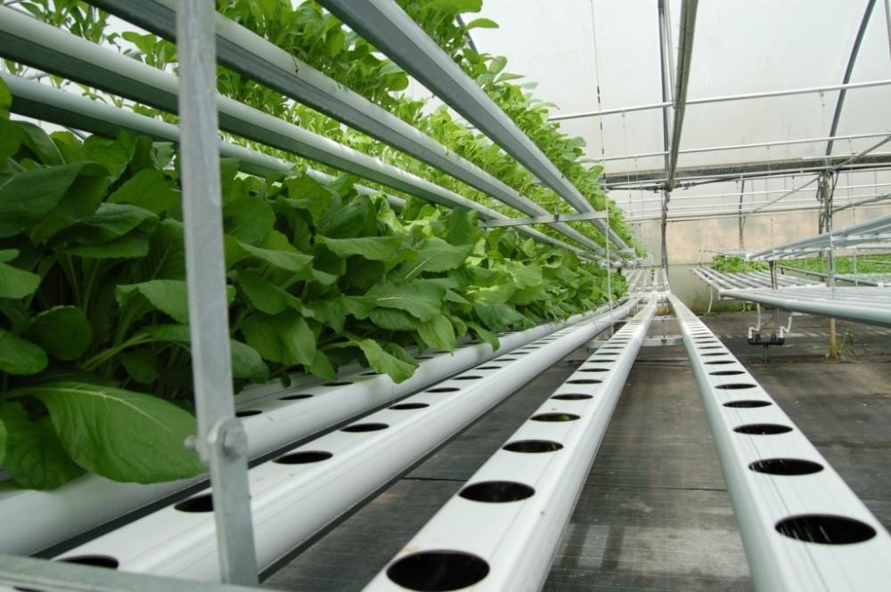 Riego por goteo y sistemas de hidroponia para invernaderos - Sistemas de goteo ...
