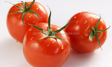 <span class=keywords><strong>Tomates</strong></span> Cerises fraîches/<span class=keywords><strong>Tomates</strong></span> Fraîches
