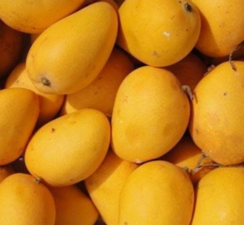 Pictures Of Mango Fruit