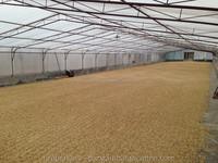 Arabica Grade 3 - Green Bean - Indonesia Coffee