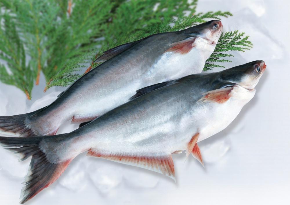 Pangasius Basa Fish Swai Fish Dory Fish