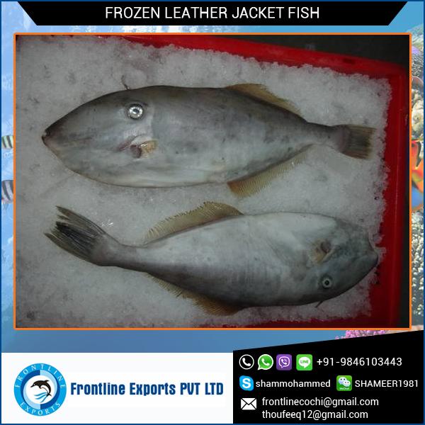 Jaqueta de couro de peixe inteiro congelado rodada peixe for Leather jacket fish