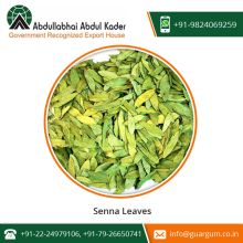 Exceedingly Powerful Natural Dried Senna Leaves