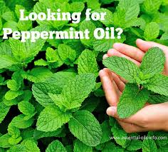 Pure and Natural Peppermint Oil From Sri Venkatesh Aromas