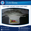 Protein Rich Long Shelf Life Distinct Flavor Fresh Leather Jacket Fish