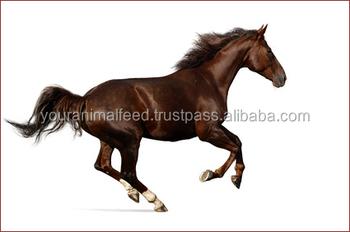 Racing Horse Feed - Buy Horse Feed Trough,Horse Feed Bins,Bulk Feed Product  on Alibaba com