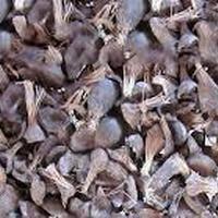 High Quality Palm Kernel Shells (pks)