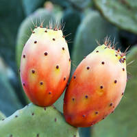 Prickly Pear Seed Oil 100% Pure Quality