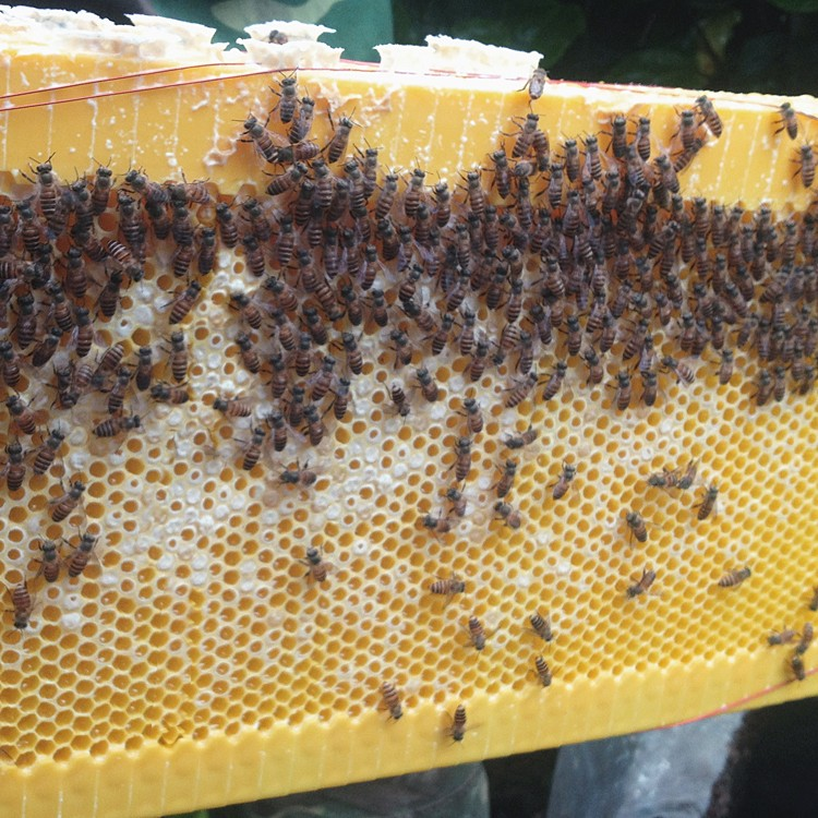 Honey Flow Hive Frames (6 Pieces) Out Flow Bee Hive Frames Plastic ...