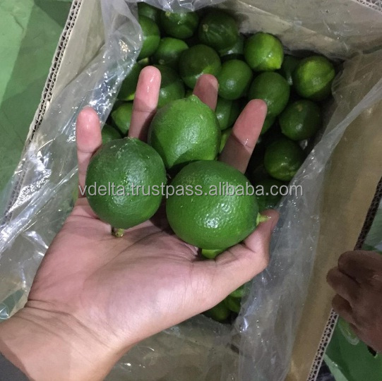Fresh Lime/Lemon - citrus fruit