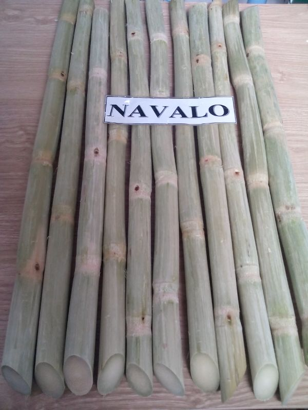 FRESH SUGAR CANE (STICK)