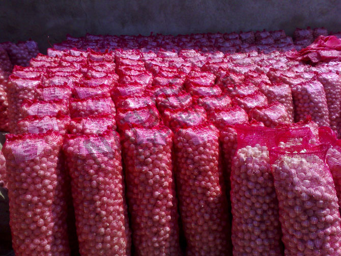 50mm size red onion
