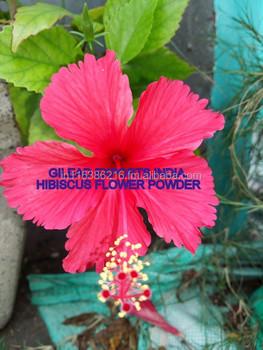 Hibiscus Flower Powderhibiscus Rosa Sinensis Powderhibiscus