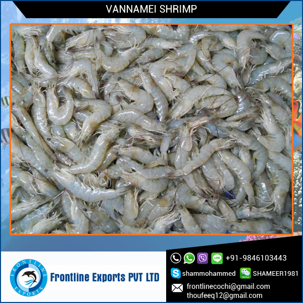 Highly Appreciated Whole Round Frozen Shrimp at Attractive Price