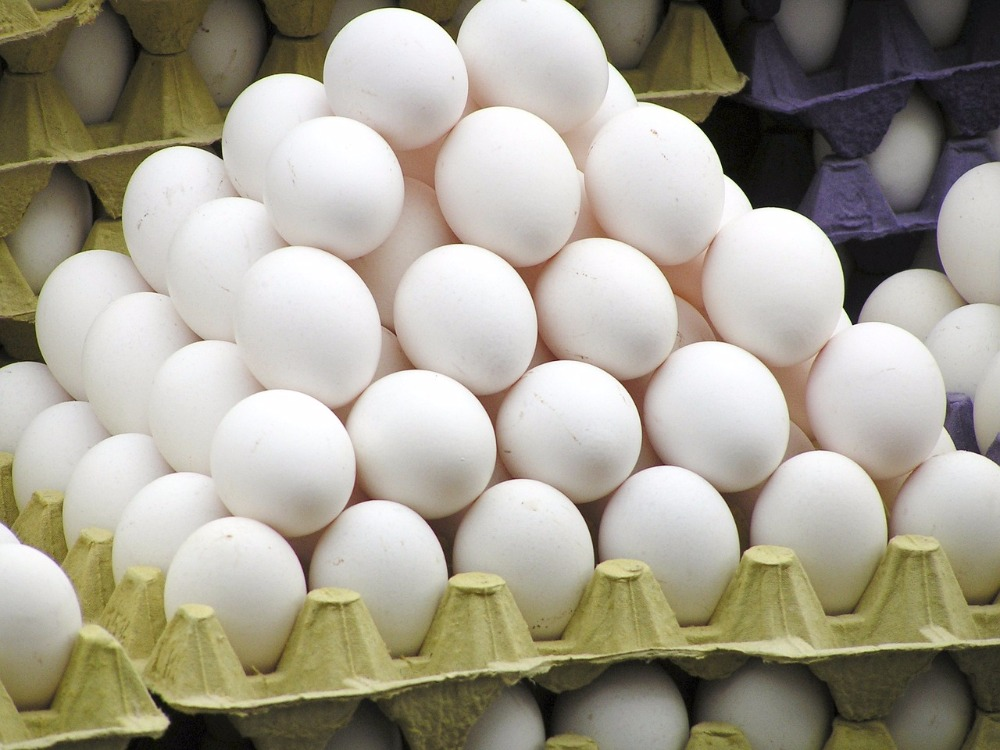 Hatching Eggs, Hatching Eggs Suppliers and Manufacturers at ...