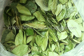 Best Graviola Dry Leaves Manufacturer