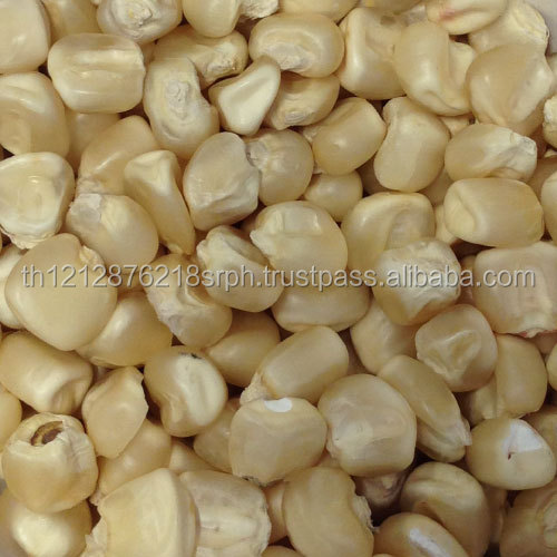 Quality Grade 1 White Corn/Maize for Human & Animal Feed