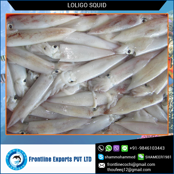Frozen Whole Round Cleaned Loligo Squid