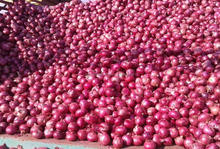 Exporting Quality Fresh onion at a Nice Price