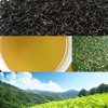 The copper wire, floral fruity, fresh and cool water green tea type OP