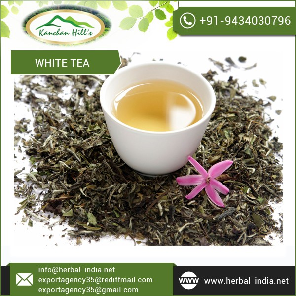 Factory Manufactured White Tea for Sale at Premium Rate