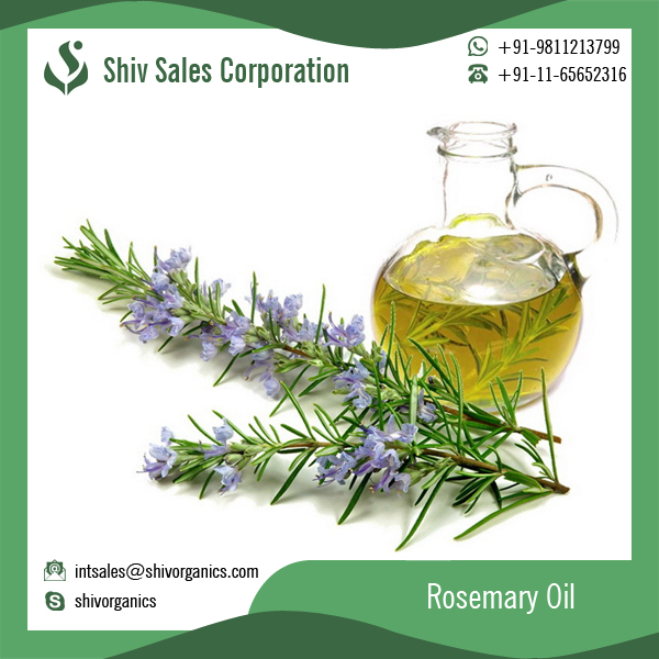 Best for Massage and Skin Color Lightening Rosemary Oil at Low Price