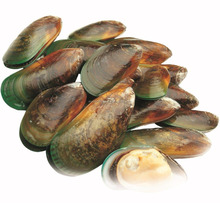 New Zealand 100% Pure Green lipped mussel powder