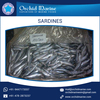 Protein Rich Long Shelf Life Tasty Sardine Fish from Wholesale Supplier