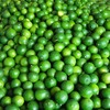 FRESH SEEDLESS LIME / VIETNAM EXPORTER