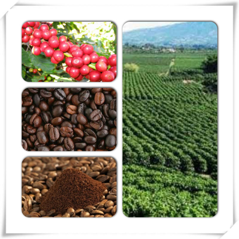 Arabica Coffee And Robusta Coffee Beans Vietnam 2014 Crop ...