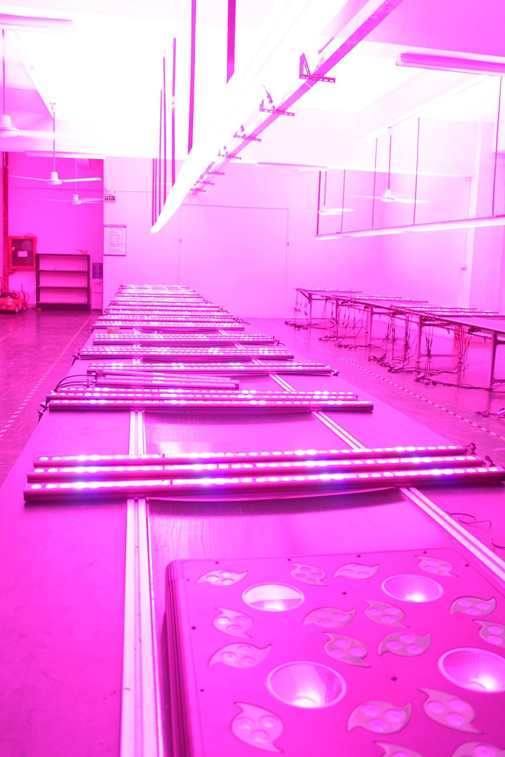 Shenzheng Factory 1280w(256*5w) LED Grow Lighting,LED Grow Lights, Apollo led grow light