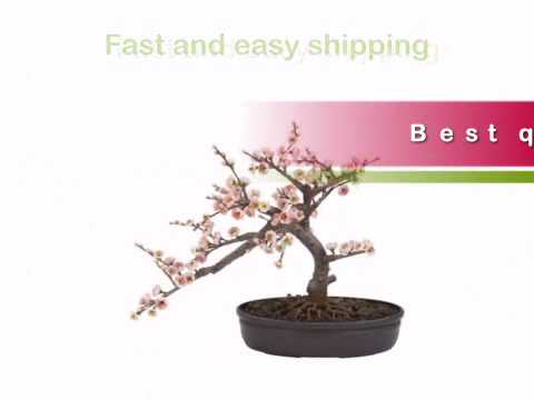 Cherry Blossom Bonsai Tree - Artificial Plants and Trees