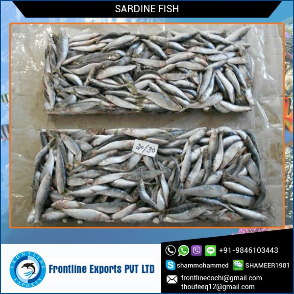 Safe to Eat High Grade Frozen Sardine Available for Wholesale Buyer
