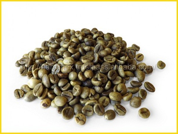 Supplier Arabica And Robusta Green Coffee Beans For Sale
