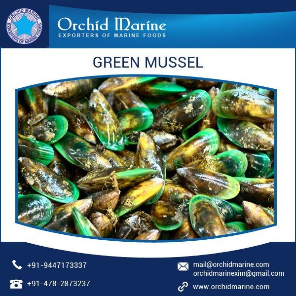 High Quality Frozen Sea Food Shell Green Mussel For Sale - Buy Half Shell  Green Mussels,Green Lipped Mussel,Half Shell Mussel Product on Alibaba com