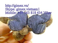 GIMEX VIET NAM PURPLE GINGER