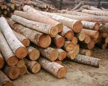 Coconut Wood Logs - Buy Exotic Logs Product on Alibaba com