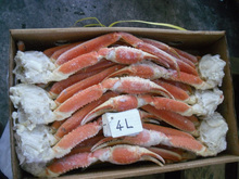 Premium and High quality mud crab with hokkaido made in Japan