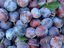 IQF frozen fruit plum for sale