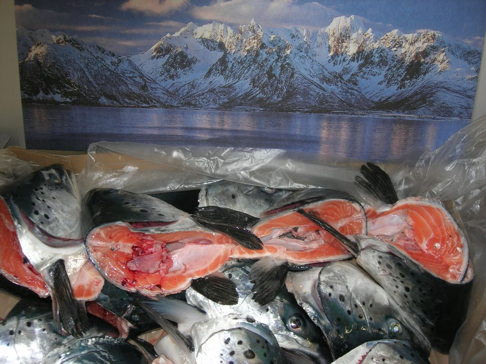 Salmon heads large size frozen from Norway