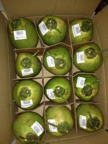 Import Coconuts, Import Coconuts Suppliers and Manufacturers