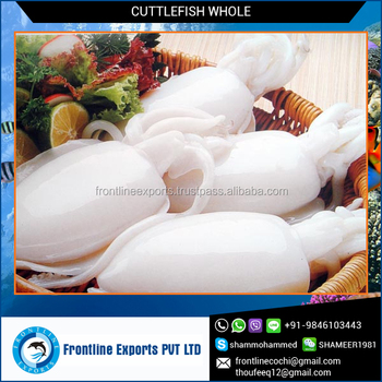 Fresh Frozen Cuttlefish with IQF Freezing Process