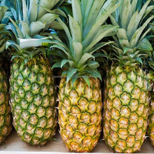 VIET NAM FRESH PINEAPPLE WITH HIGH QUALITY, TOP CHEAP PRICE NOW