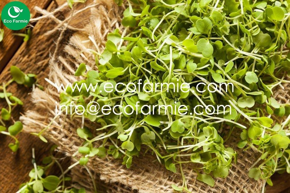 Natural Biodegradable Coconut Fiber Coir Fibre Grow Mat Sheets For  Microgreens/ Coco Precut Pads - Buy Grow Mat Microgreens,Coconut Fiber  Sheet