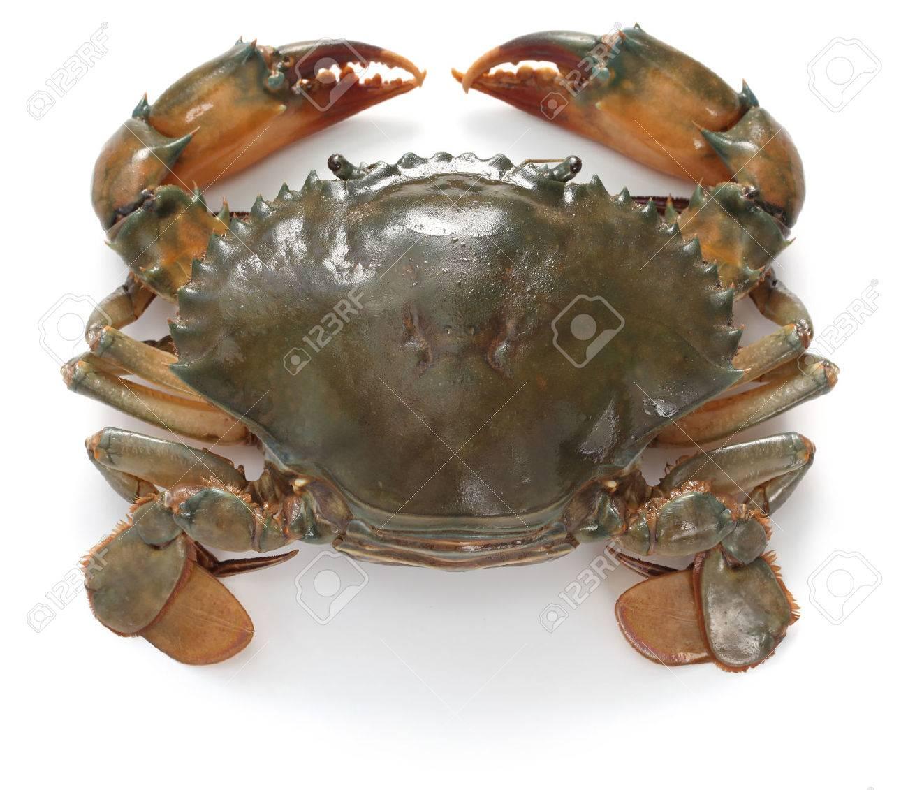Live Mud Crab,Live King Crab,Live Blue Crab Red King Crab For Sale - Buy  Live Mud Crabs/blue Crabs/king Crabs /live Seafood For Sale Product on