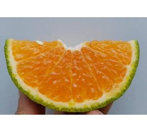 FRESH GREEN ORANGE - JUICY KING MANDARIN