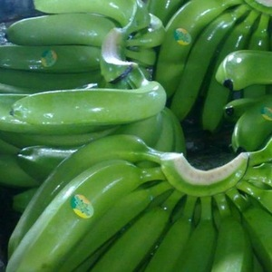 Fresh Green Dole plantain and banana