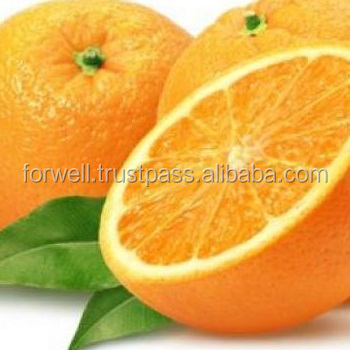 juicy and sweety fresh navel / baladi / valencia orange