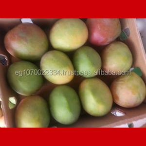 Fresh Fruits Trading Est Dammam Saudi Arabia